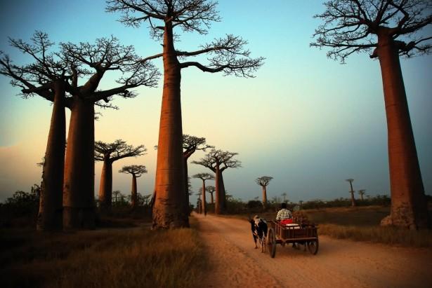 Madagaskar2